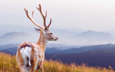 Metsästykseen tarvitaan rajoja ja kurinalaisuutta