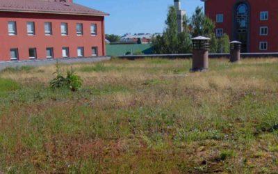 Uusia ideoita luontokadon torjuntaan kaupungeissa