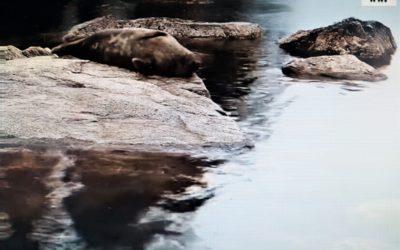 SDP, keskusta ja RKP tyrmäsivät heinäkuun kalastusrajoitukset Saimaan norppa-alueella